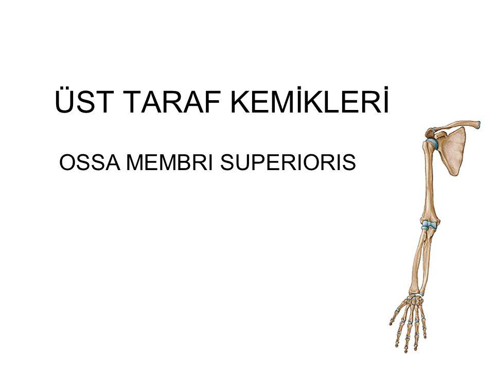 OSSA MEMBRI SUPERIORIS