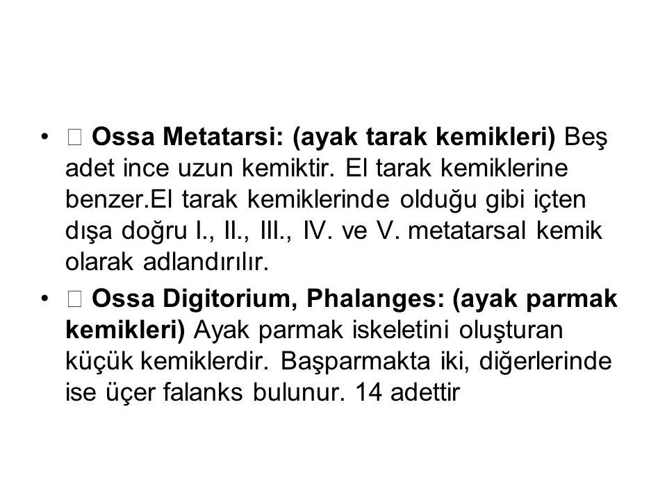  Ossa Metatarsi: (ayak tarak kemikleri) Beş adet ince uzun kemiktir