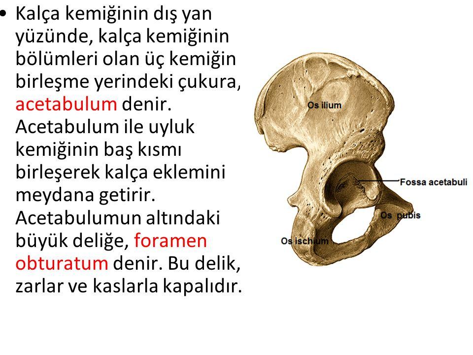 Kalça kemiğinin dış yan yüzünde, kalça kemiğinin bölümleri olan üç kemiğin birleşme yerindeki çukura, acetabulum denir.