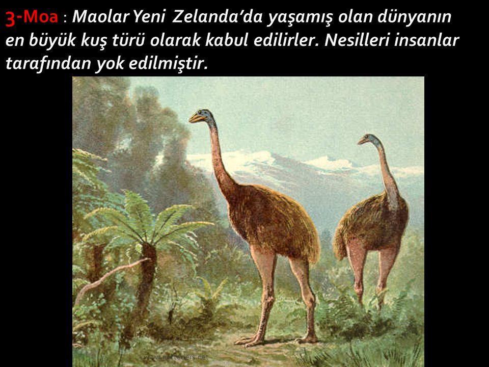 3-Moa : Maolar Yeni Zelanda'da yaşamış olan dünyanın en büyük kuş türü olarak kabul edilirler. Nesilleri insanlar tarafından yok edilmiştir.