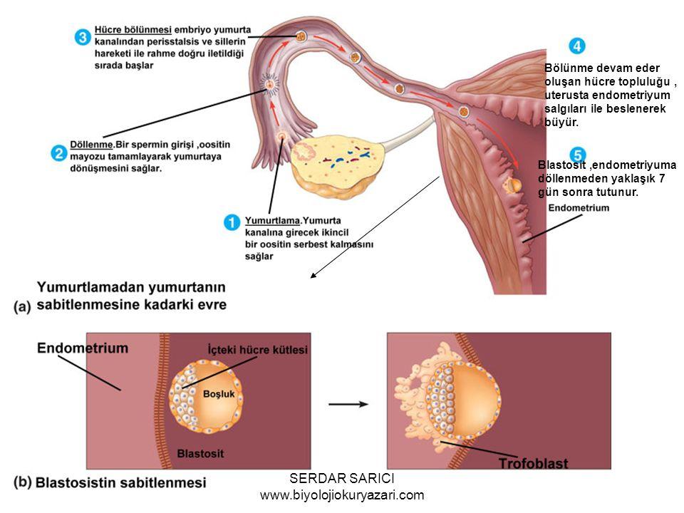 SERDAR SARICI www.biyolojiokuryazari.com