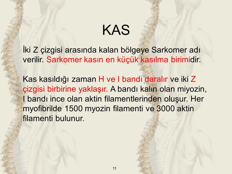KAS İki Z çizgisi arasında kalan bölgeye Sarkomer adı verilir. Sarkomer kasın en küçük kasılma birimidir.