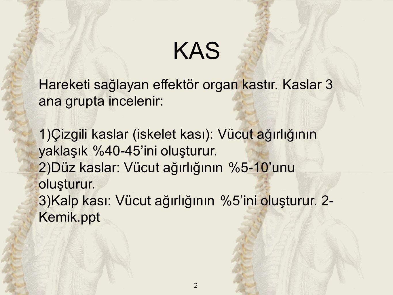 KAS Hareketi sağlayan effektör organ kastır. Kaslar 3 ana grupta incelenir: