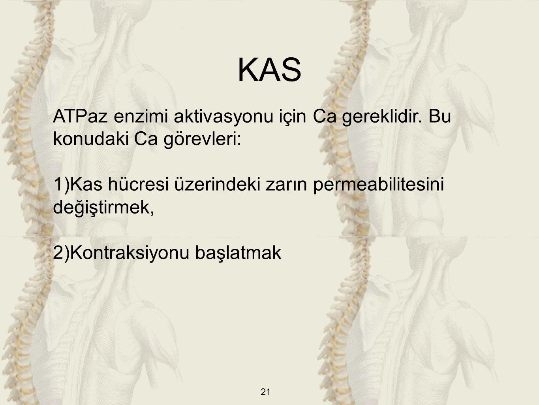 KAS ATPaz enzimi aktivasyonu için Ca gereklidir. Bu konudaki Ca görevleri: Kas hücresi üzerindeki zarın permeabilitesini değiştirmek,