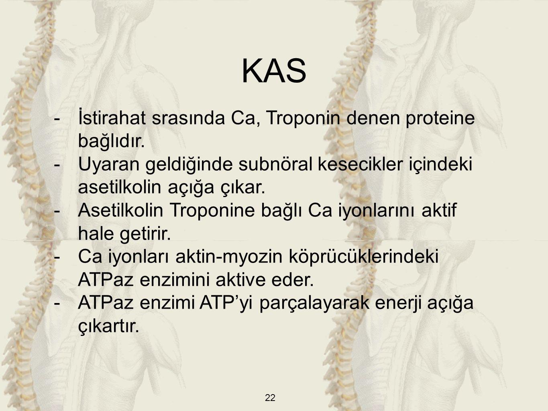 KAS İstirahat srasında Ca, Troponin denen proteine bağlıdır.