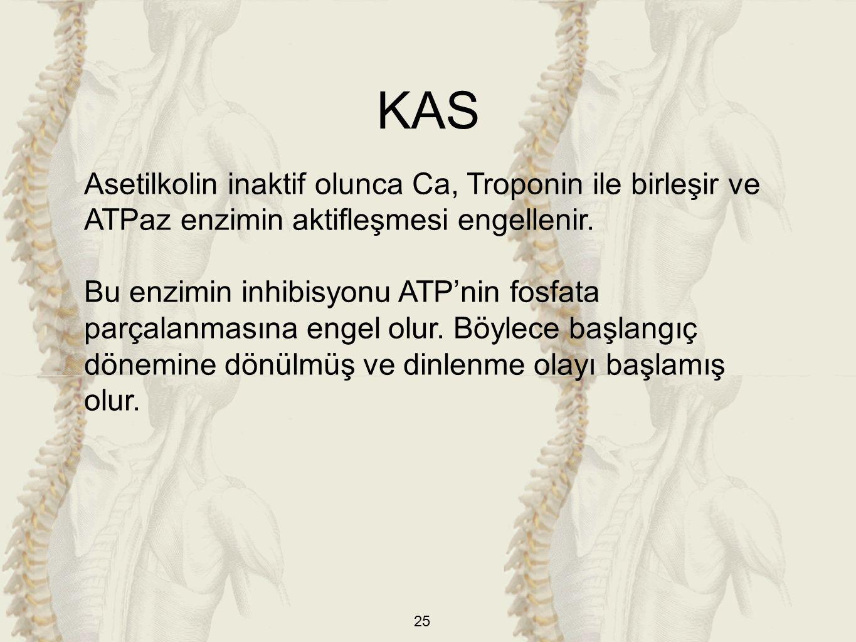 KAS Asetilkolin inaktif olunca Ca, Troponin ile birleşir ve ATPaz enzimin aktifleşmesi engellenir.