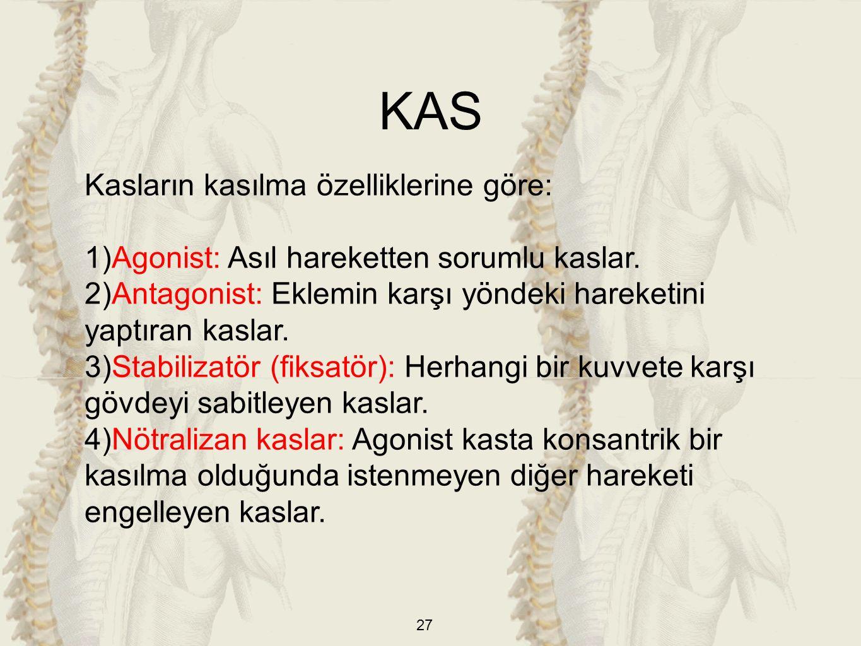 KAS Kasların kasılma özelliklerine göre: