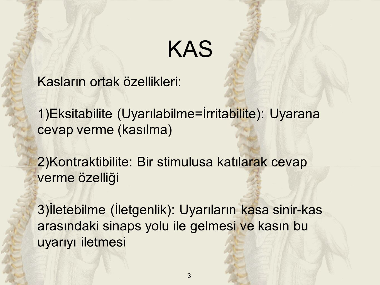 KAS Kasların ortak özellikleri: