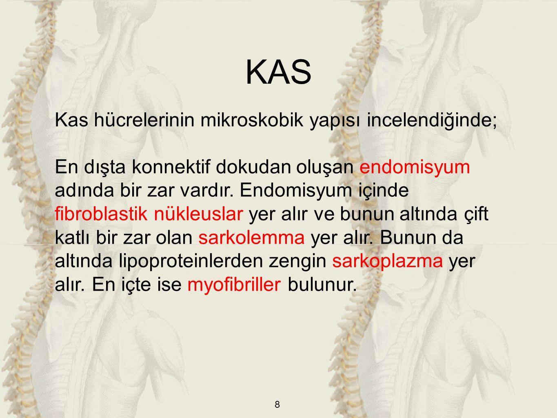 KAS Kas hücrelerinin mikroskobik yapısı incelendiğinde;