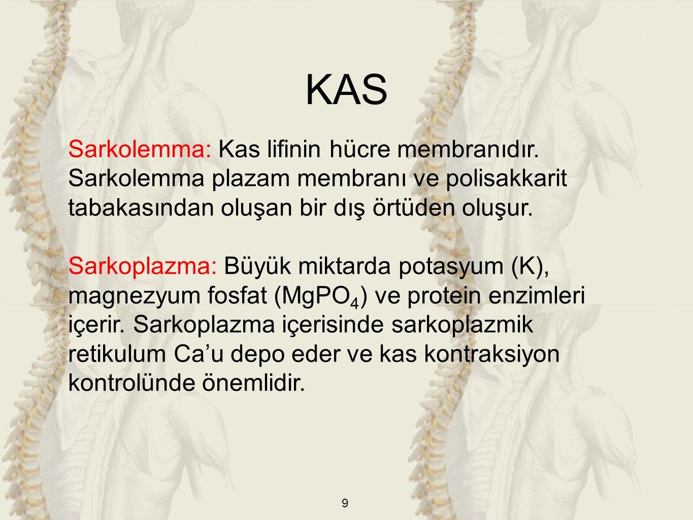 KAS Sarkolemma: Kas lifinin hücre membranıdır. Sarkolemma plazam membranı ve polisakkarit tabakasından oluşan bir dış örtüden oluşur.