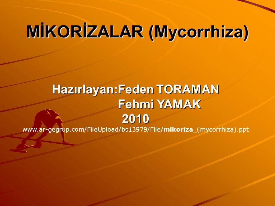 MİKORİZALAR (Mycorrhiza)