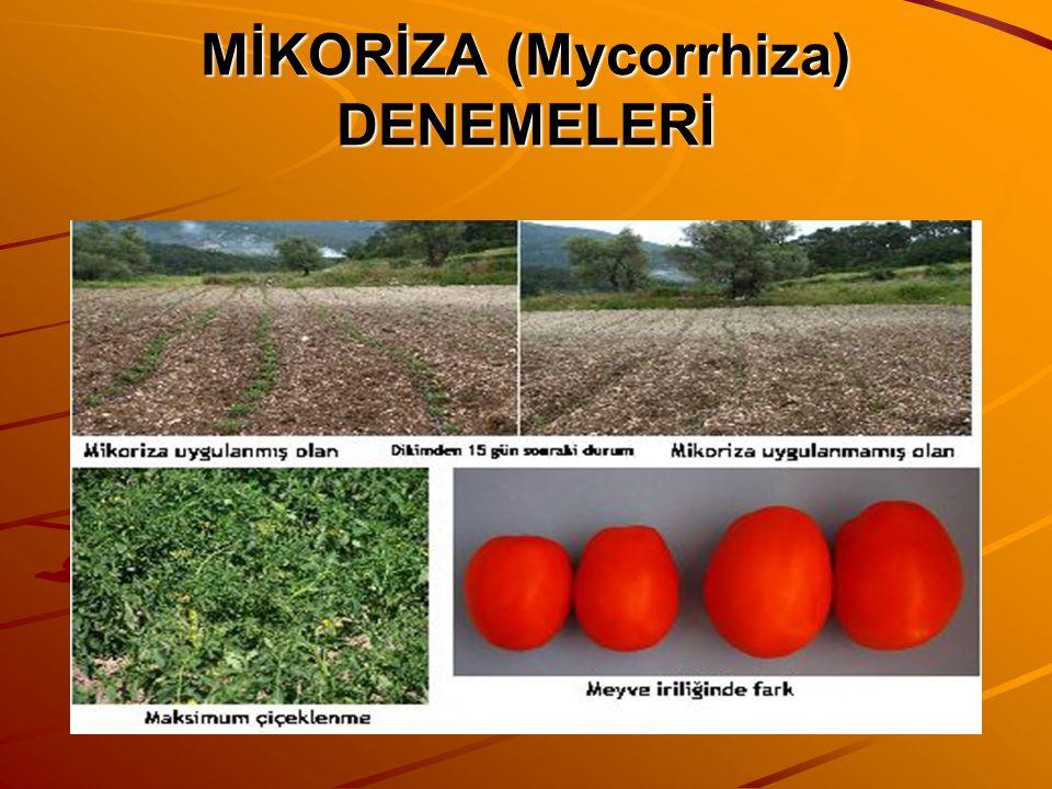 MİKORİZA (Mycorrhiza) DENEMELERİ