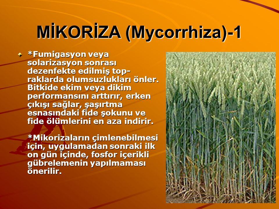 MİKORİZA (Mycorrhiza)-1