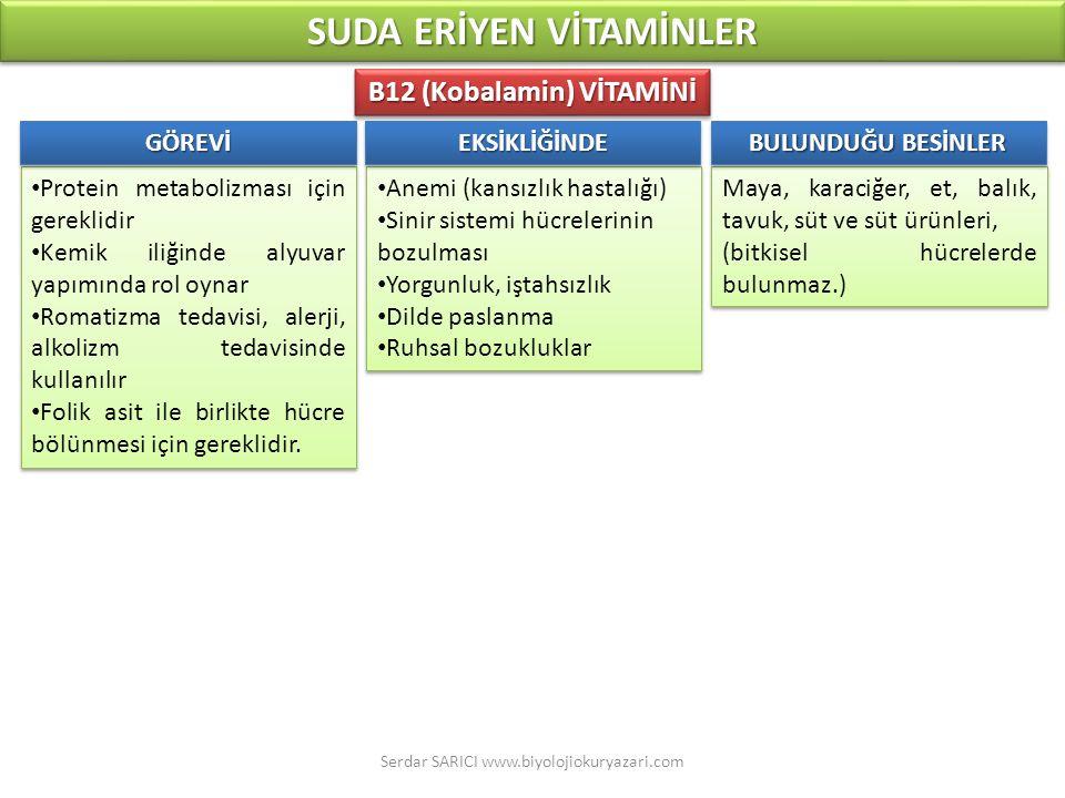 SUDA ERİYEN VİTAMİNLER B12 (Kobalamin) VİTAMİNİ