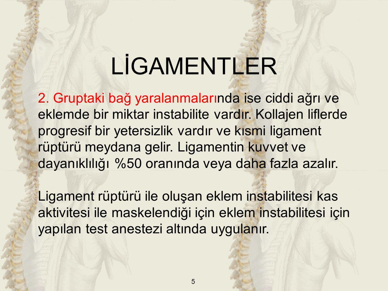 LİGAMENTLER