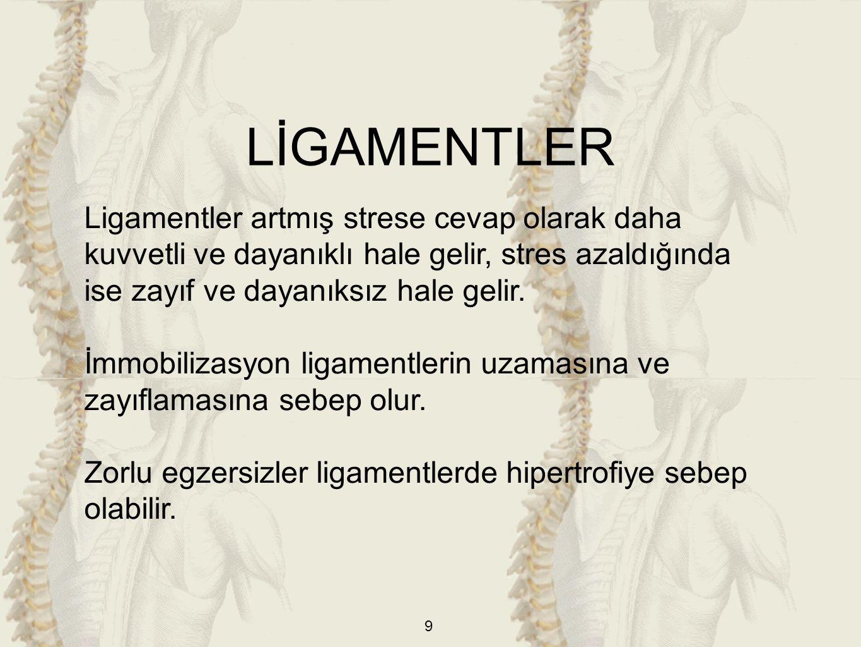 LİGAMENTLER Ligamentler artmış strese cevap olarak daha kuvvetli ve dayanıklı hale gelir, stres azaldığında ise zayıf ve dayanıksız hale gelir.