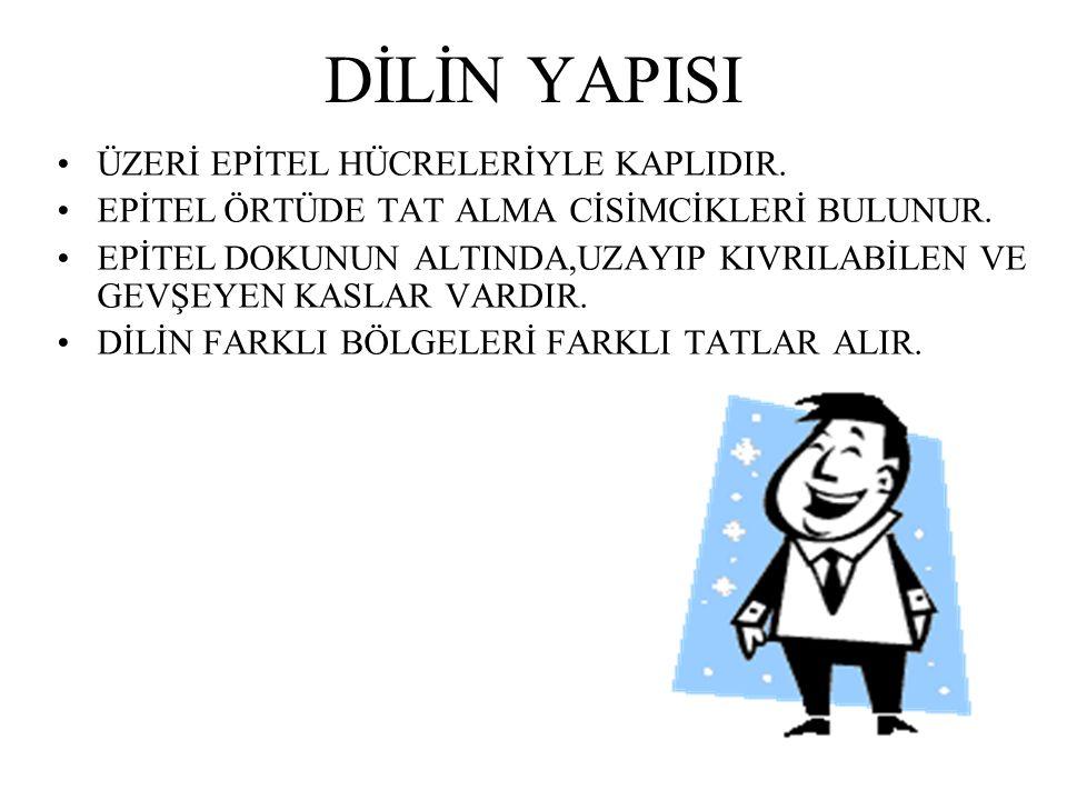 DİLİN YAPISI ÜZERİ EPİTEL HÜCRELERİYLE KAPLIDIR.