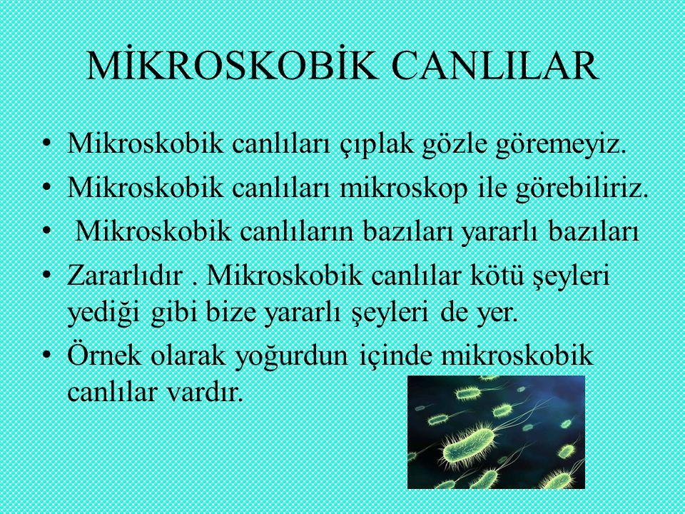 MİKROSKOBİK CANLILAR Mikroskobik canlıları çıplak gözle göremeyiz.