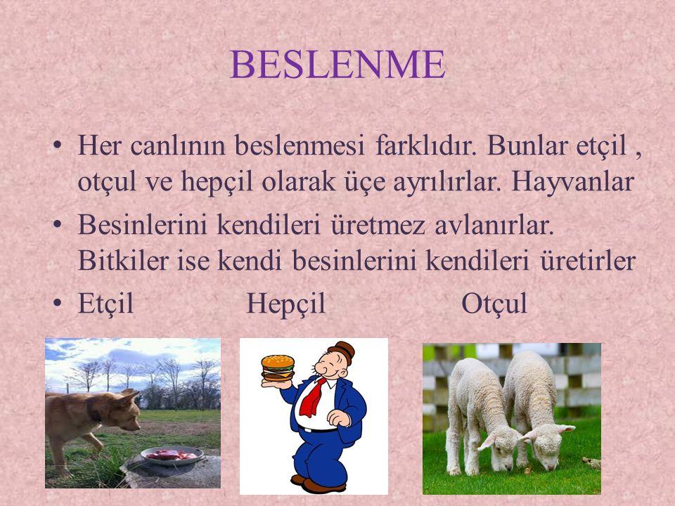 BESLENME Her canlının beslenmesi farklıdır. Bunlar etçil , otçul ve hepçil olarak üçe ayrılırlar. Hayvanlar.