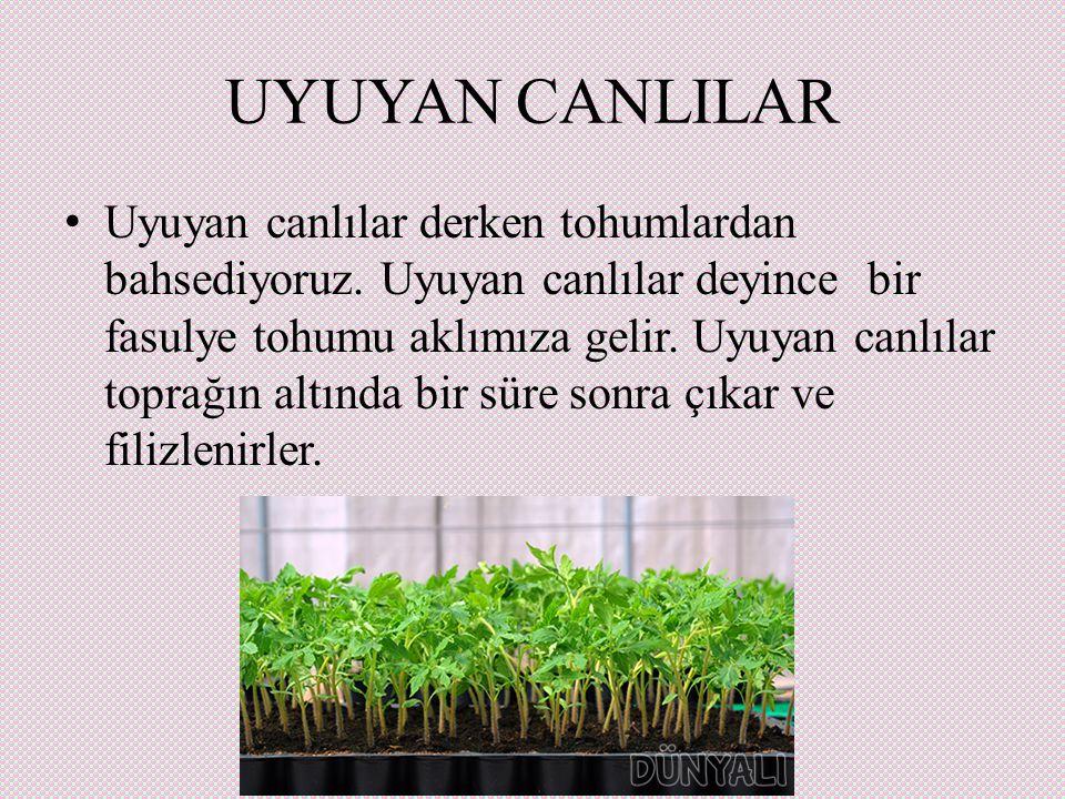 UYUYAN CANLILAR