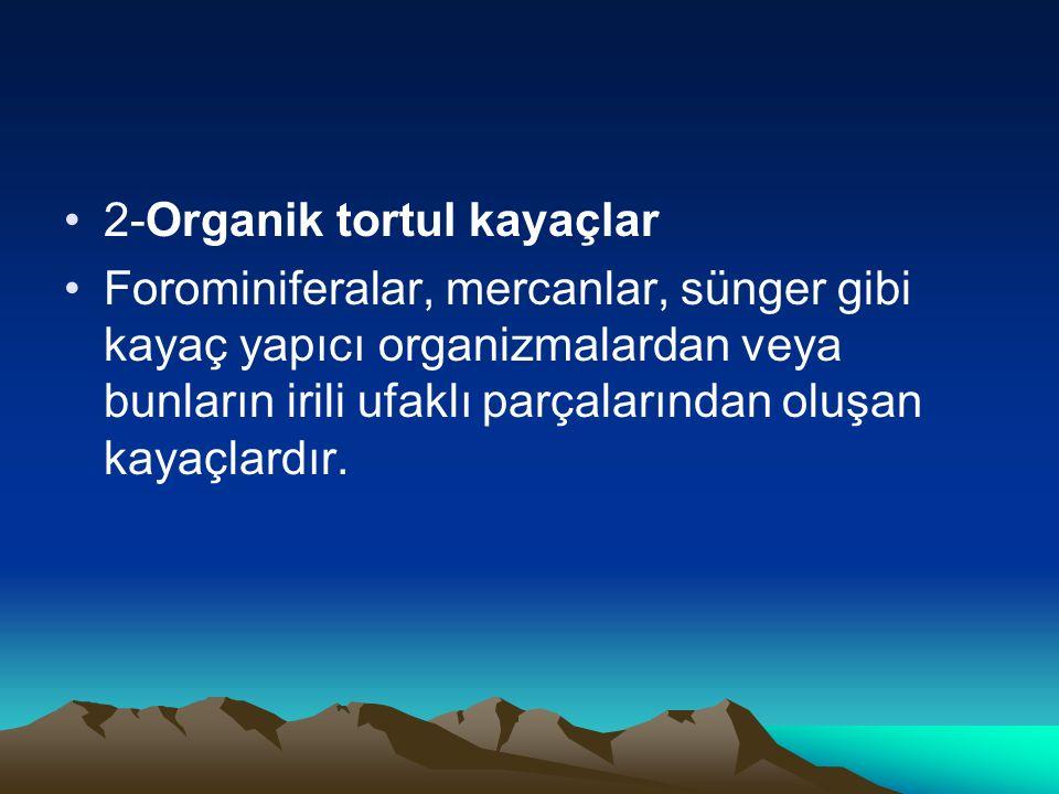 2-Organik tortul kayaçlar