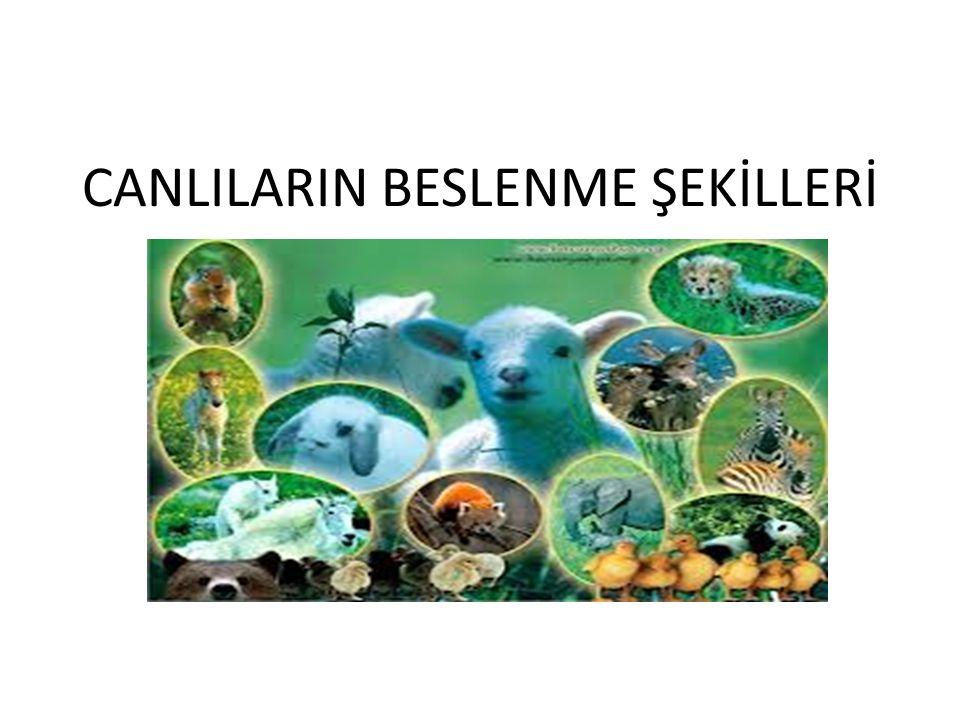 CANLILARIN BESLENME ŞEKİLLERİ