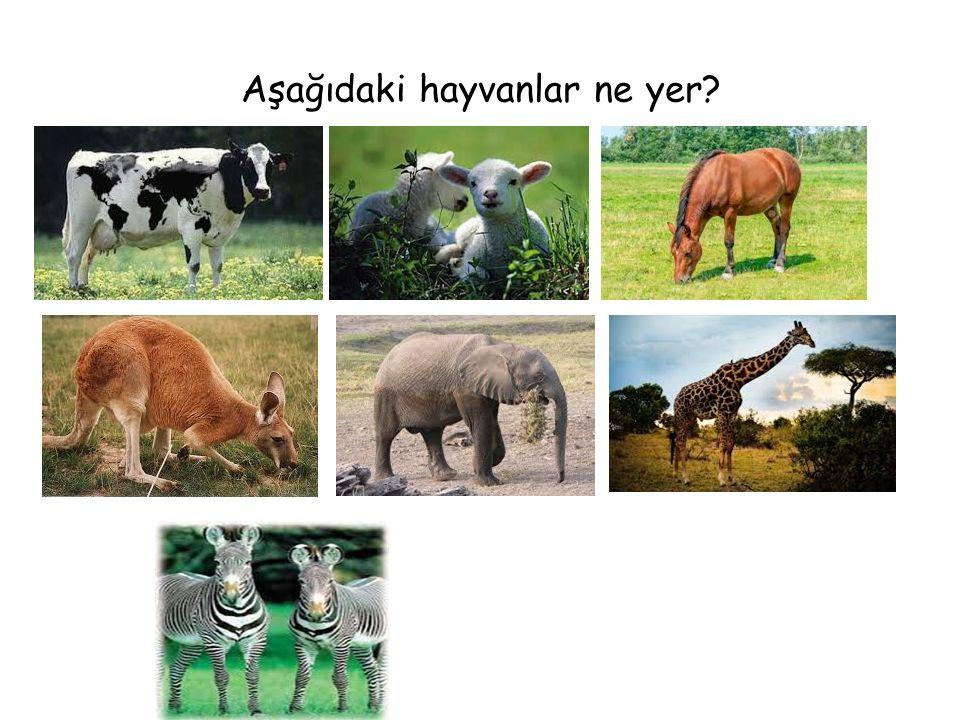 Aşağıdaki hayvanlar ne yer