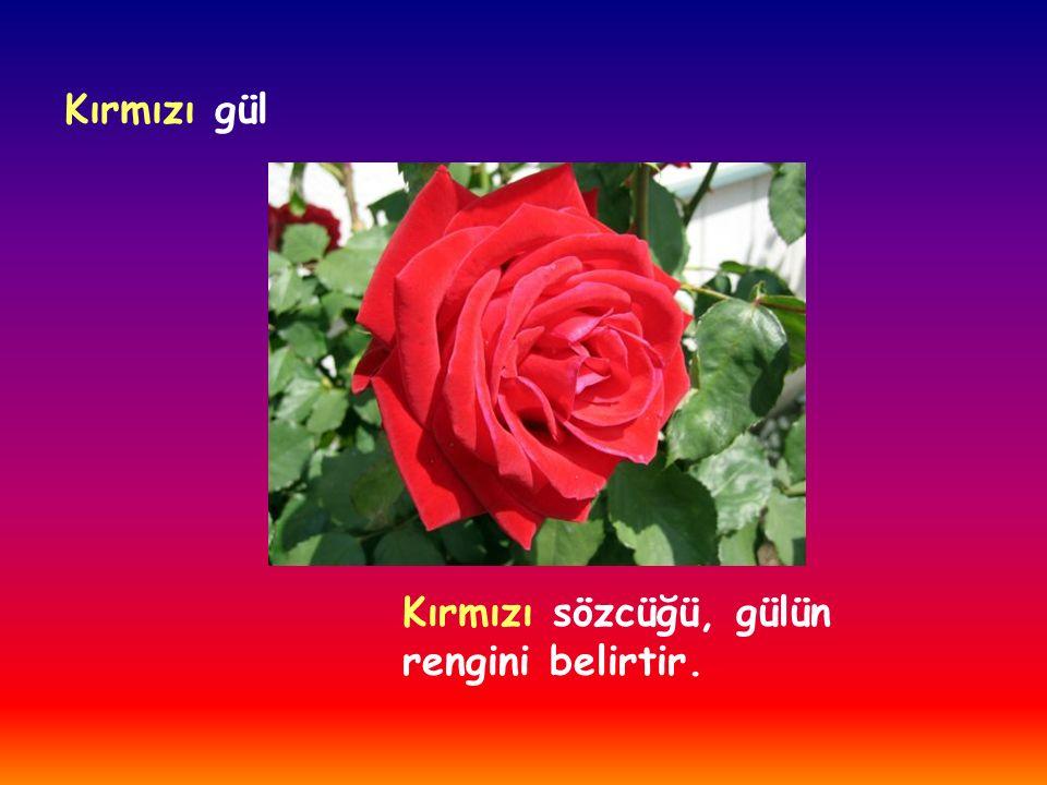 Kırmızı gül Kırmızı sözcüğü, gülün rengini belirtir.