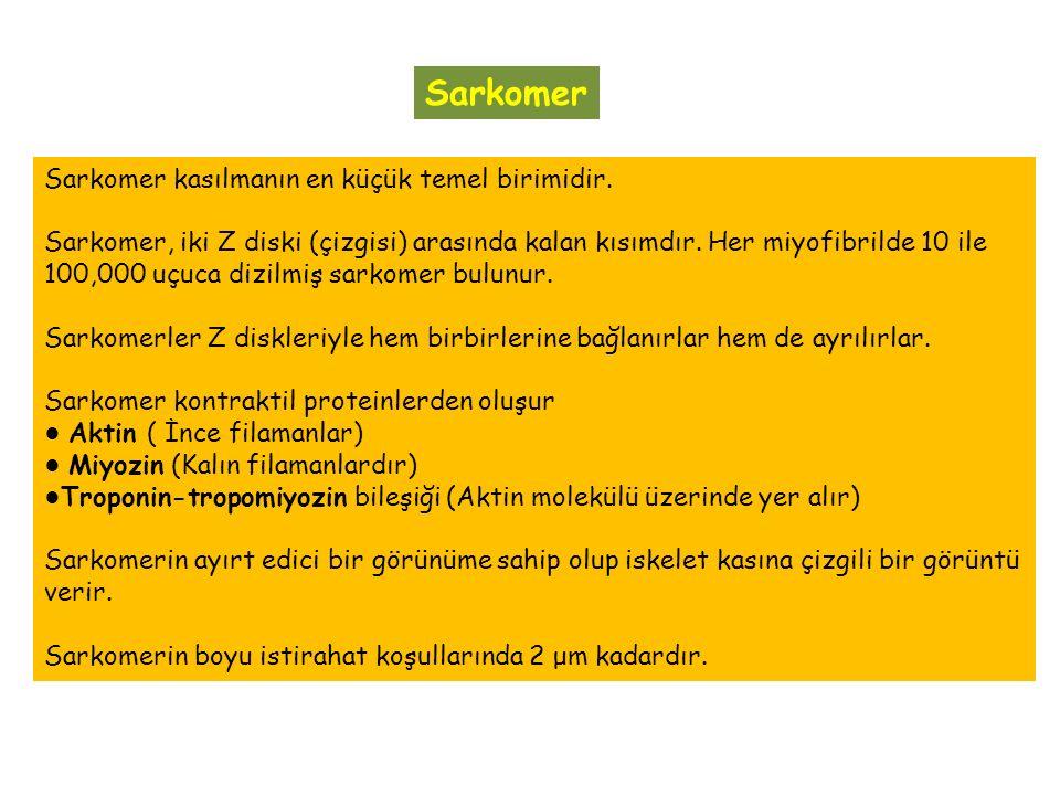 Sarkomer Sarkomer kasılmanın en küçük temel birimidir.