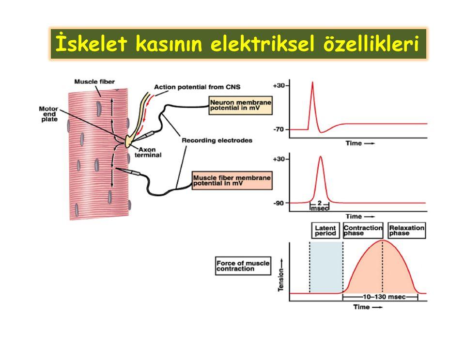 İskelet kasının elektriksel özellikleri