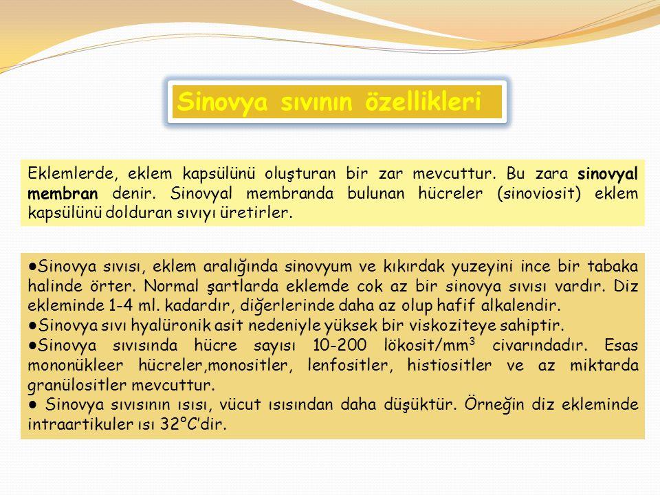 Sinovya sıvının özellikleri
