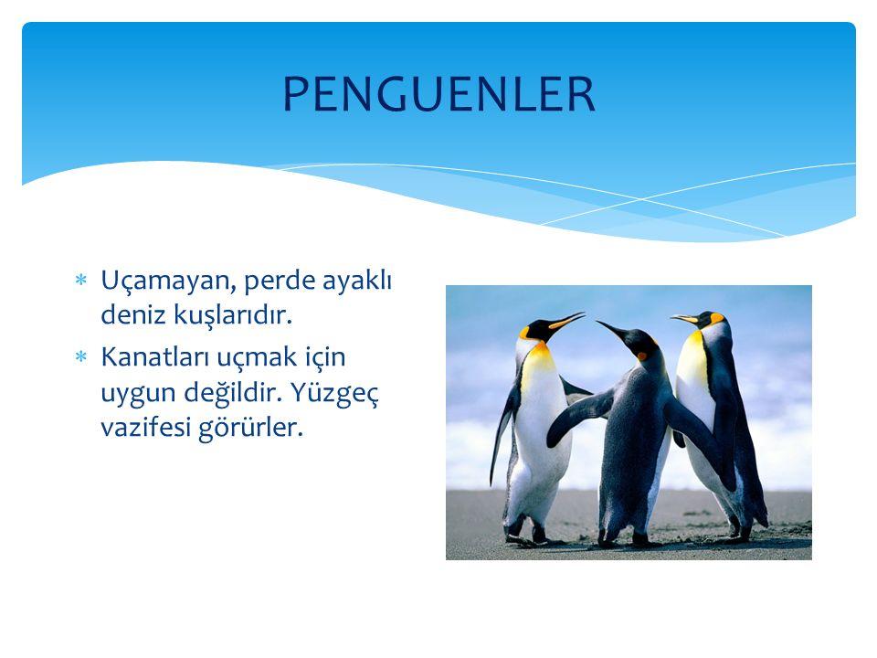 PENGUENLER Uçamayan, perde ayaklı deniz kuşlarıdır.