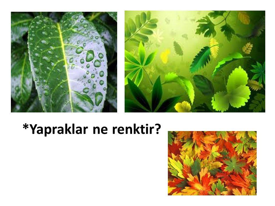 *Yapraklar ne renktir