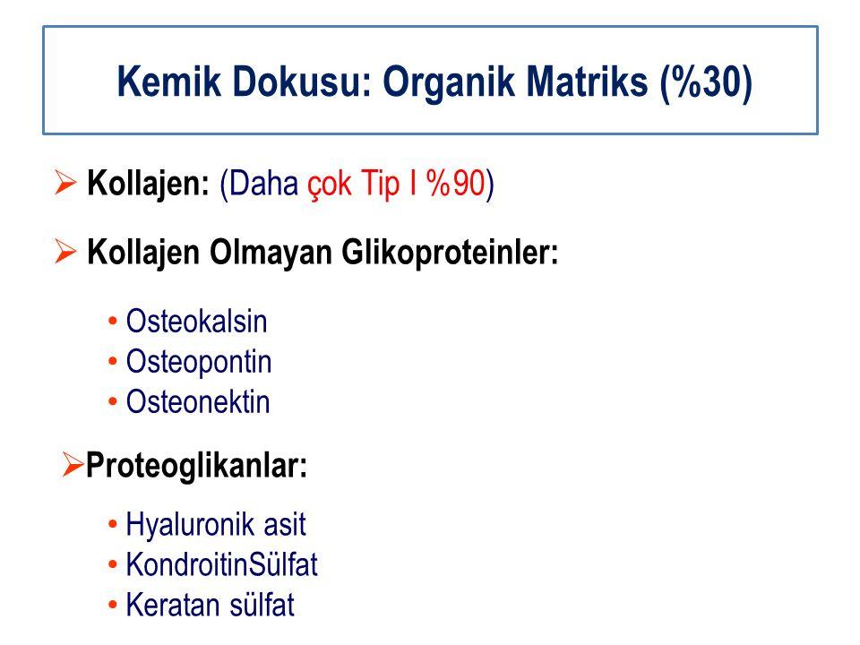 Kemik Dokusu: Organik Matriks (%30)