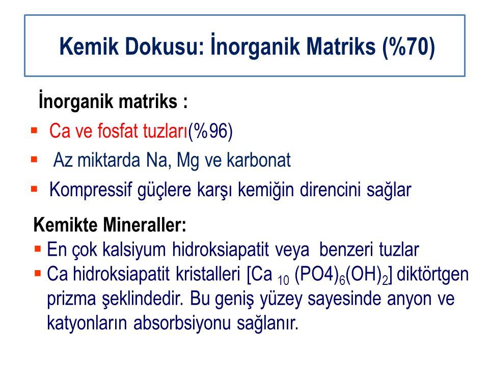 Kemik Dokusu: İnorganik Matriks (%70)