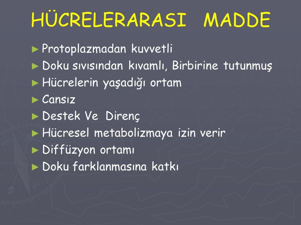 HÜCRELERARASI MADDE Protoplazmadan kuvvetli
