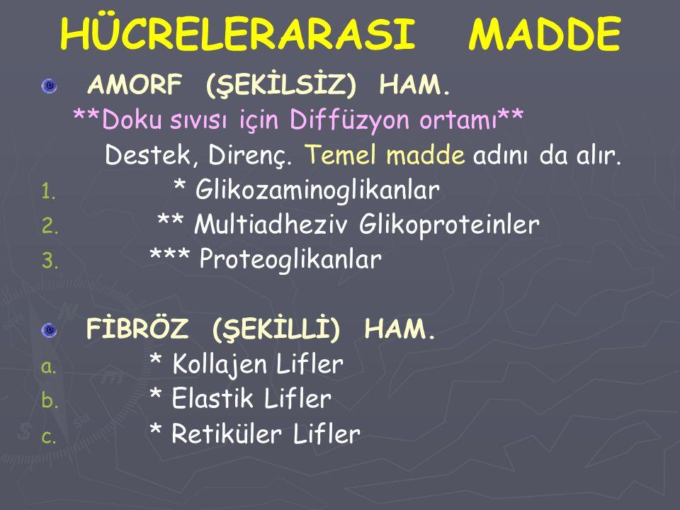 HÜCRELERARASI MADDE AMORF (ŞEKİLSİZ) HAM.