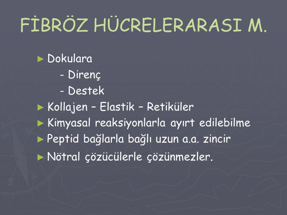FİBRÖZ HÜCRELERARASI M.
