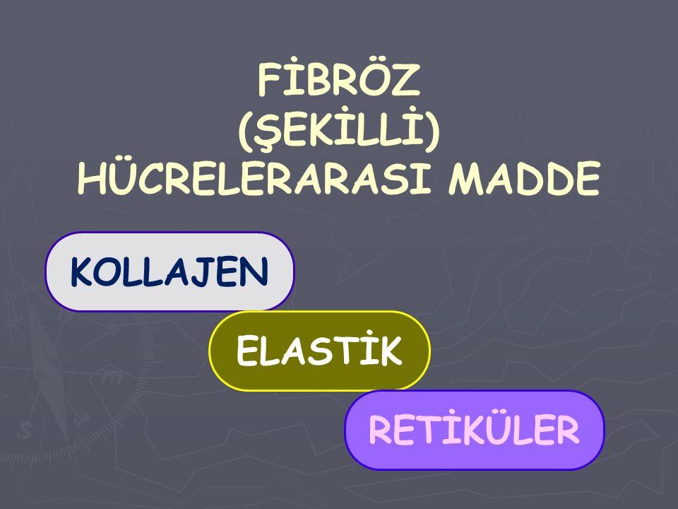 FİBRÖZ (ŞEKİLLİ) HÜCRELERARASI MADDE