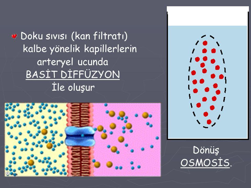 Doku sıvısı (kan filtratı) kalbe yönelik kapillerlerin arteryel ucunda