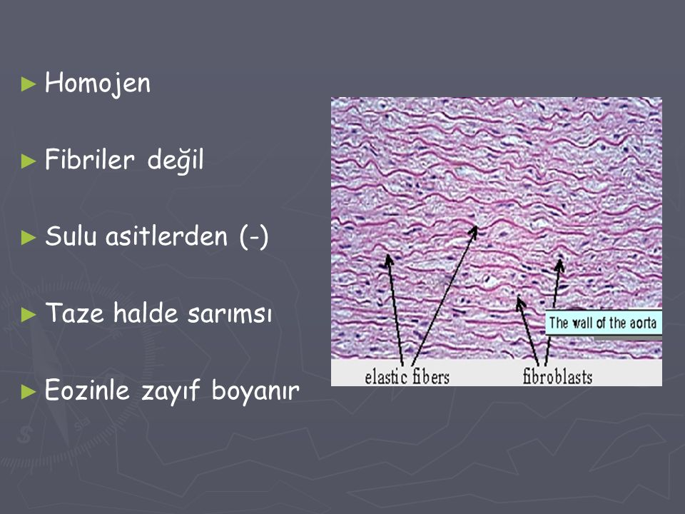 Homojen Fibriler değil Sulu asitlerden (-) Taze halde sarımsı Eozinle zayıf boyanır