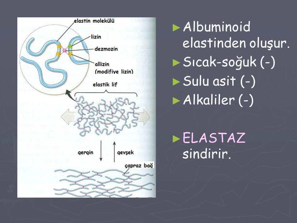 Albuminoid elastinden oluşur.
