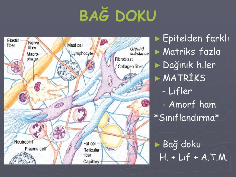 BAĞ DOKU Epitelden farklı Matriks fazla Dağınık h.ler MATRİKS - Lifler