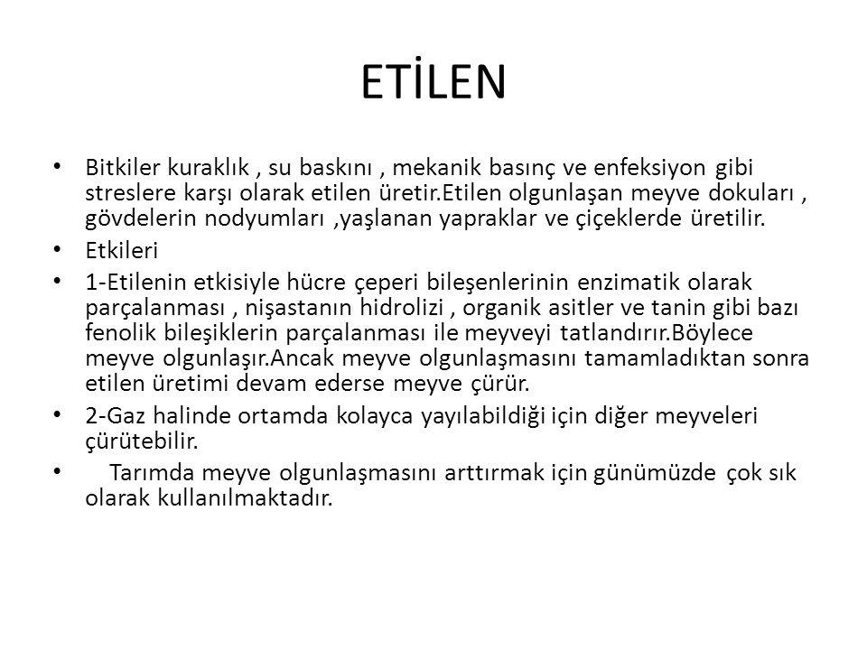 ETİLEN