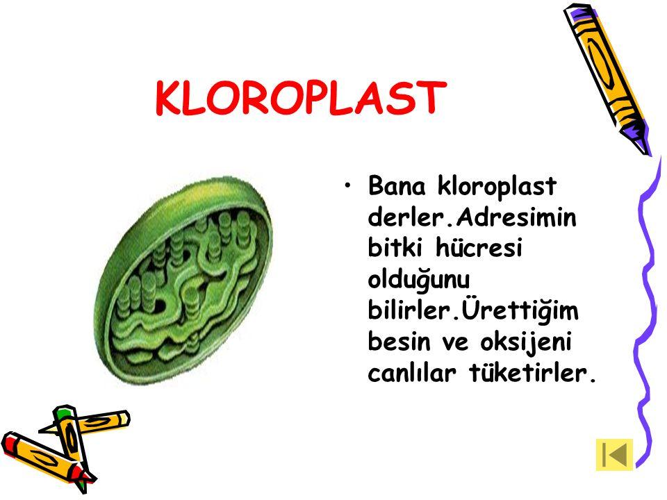 KLOROPLAST Bana kloroplast derler.Adresimin bitki hücresi olduğunu bilirler.Ürettiğim besin ve oksijeni canlılar tüketirler.