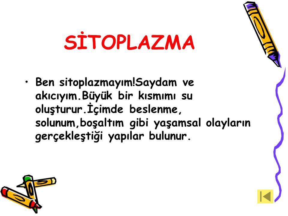 SİTOPLAZMA