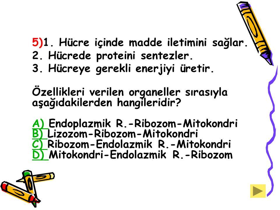 2. Hücrede proteini sentezler. 3. Hücreye gerekli enerjiyi üretir.