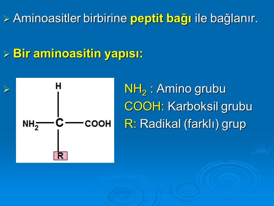 Aminoasitler birbirine peptit bağı ile bağlanır.