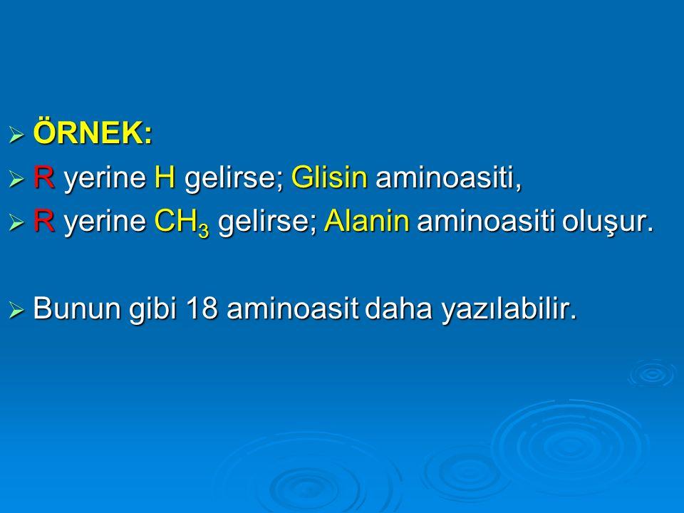 ÖRNEK: R yerine H gelirse; Glisin aminoasiti, R yerine CH3 gelirse; Alanin aminoasiti oluşur.