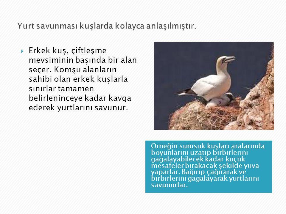 Yurt savunması kuşlarda kolayca anlaşılmıştır.